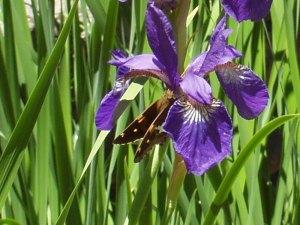 mro-Butterfly1