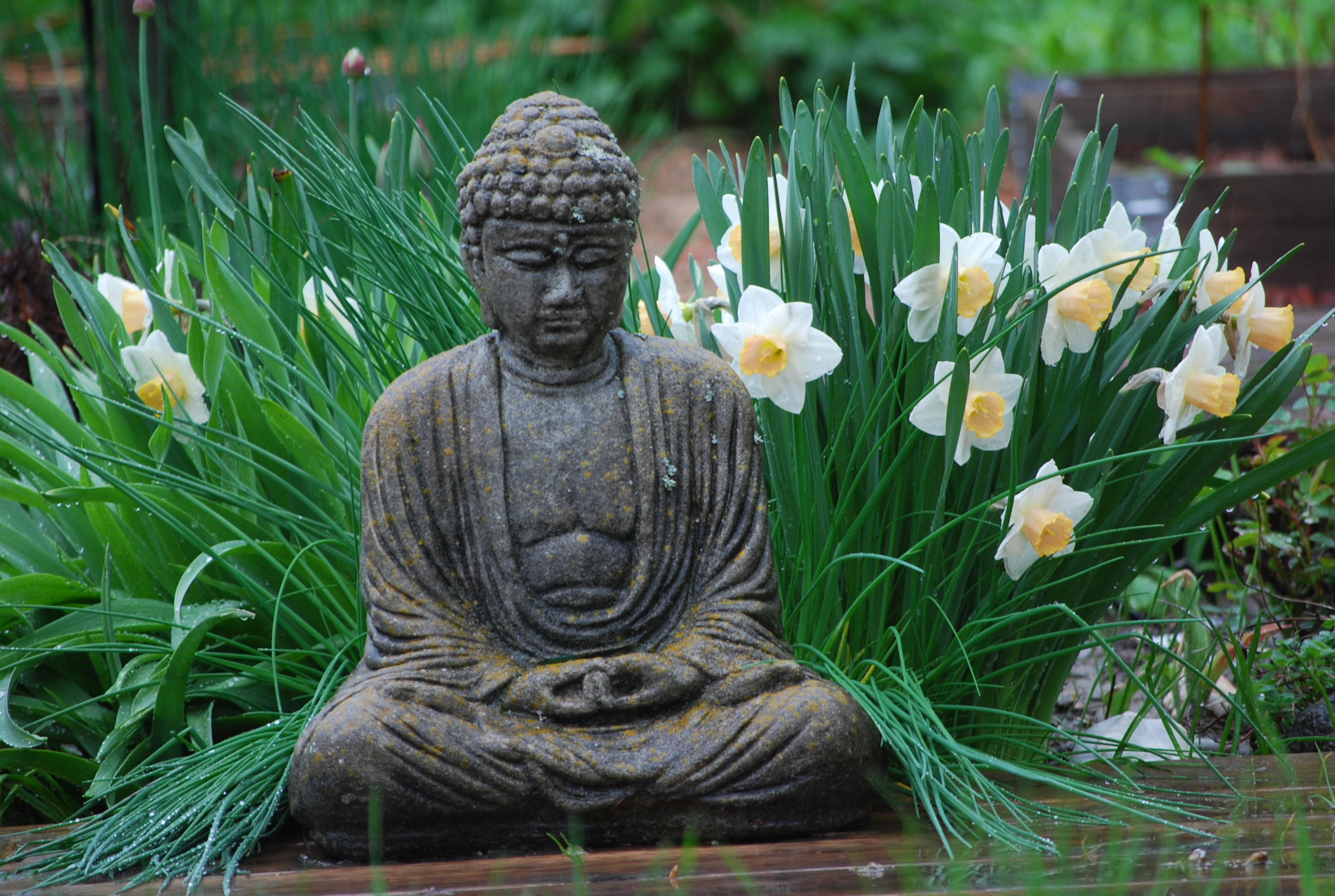 spring house buddhist personals Craigslist provides local classifieds and forums for jobs, housing, for sale, services, local community, and events.
