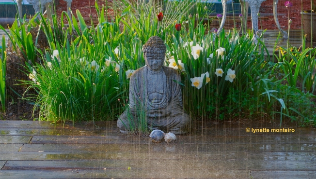 buddha-rain(c)